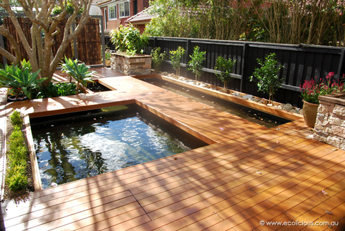 Ecolicious simple sustainable solutions for Koi fish pool