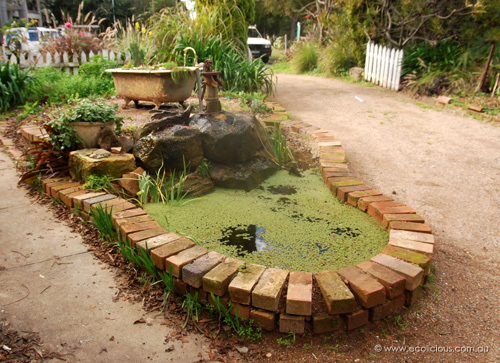 Penny Pyett's pond and clawfoot bath growbed