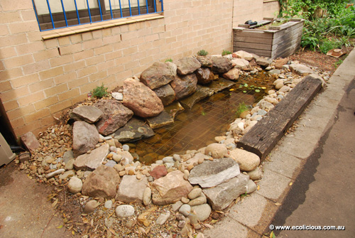 Ecolicious alexandria community garden for Aquaponics fish pond