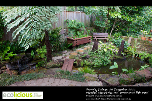 Ecolicious Simple Sustainable Solutions